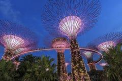 Supetree Grove während der blauen Stunde an den Gärten durch die Bucht in Singapur stockbilder