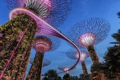 Supetree Grove während der blauen Stunde an den Gärten durch die Bucht in Singapur lizenzfreie stockbilder