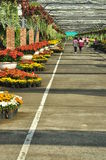 Suphan Buri, Thailand - November 19, 2015: Thailand Students visit the flower market on November 19, 2015 in Suphanburi, Thailand. Royalty Free Stock Images