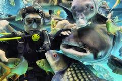 Suphanburi, ТАИЛАНД - 11-ое декабря 2015: Водолазы аквариума в пробке Chawak Стоковые Изображения RF