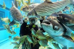 Suphanburi, THAILAND - DECEMBER 11, 2015: Aquariumduikers in Stop Chawak royalty-vrije stock foto's