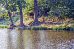Suporte com árvores e grama pelo lago Fotos de Stock