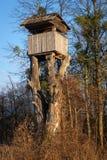Suporte da árvore da caça nas sobras de uma árvore grande Imagem de Stock Royalty Free