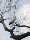 Suporte da garça-real no ramo de árvore Fotografia de Stock Royalty Free