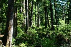 Suporte das árvores de floresta nos eixos da luz solar imagem de stock