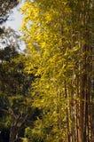 Suporte de bambu na luz solar fotografia de stock