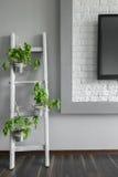 Suporte de flor criativo de DIY Fotografia de Stock Royalty Free