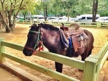 Suporte do cavalo fotos de stock