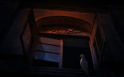 Suporte do pássaro da gaivota no castelo antigo velho da janela, backgrou assustador Fotografia de Stock Royalty Free
