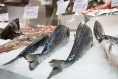 Suporte 3 dos peixes Imagens de Stock Royalty Free