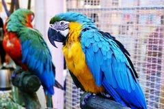 Suporte engraçado bonito do papagaio em uma loja do animal de estimação fotografia de stock