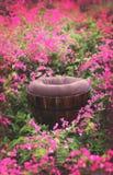 Suporte exterior do fundo de Digitas do campo de flor fotografia de stock