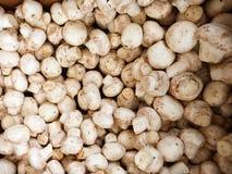 Suporte famoso do cogumelo do mercado dos fazendeiros de domingo Hollywood Imagem de Stock