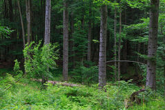 Suporte misturado natural da cordilheira de Bieszczady fotos de stock royalty free