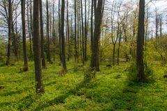 Suporte ribeirinho natural na primavera Foto de Stock Royalty Free