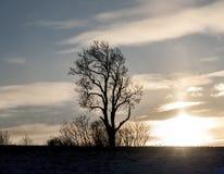 Árvore solitária no por do sol Imagem de Stock Royalty Free