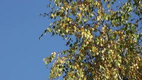 Suppengrün über einem blauen Himmel stock video footage