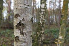 Suppengrün im Wald Lizenzfreie Stockfotografie