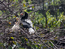 Supplica degli uccelli di bambino Immagine Stock