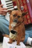 Supplica del cane Fotografie Stock Libere da Diritti