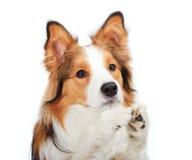 Supplica del cane Immagini Stock Libere da Diritti