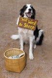 Supplica del cane da pastore Fotografie Stock