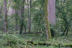 Support à feuilles caduques avec des charmes et des chênes photos stock
