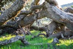 Support étrange en bois de style dans l'herbe Image libre de droits