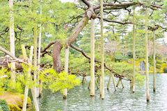 Support beams for pine tree in Kenroku-en park Stock Images