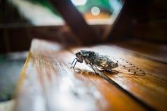 Support d'insecte sur le banc Image stock