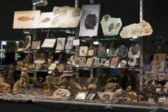 Support dans une exposition de fossiles Photos libres de droits