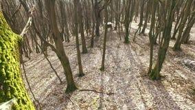 Support de chasse de boîte dans la forêt banque de vidéos