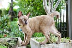 Support de chat sur des pots Photos libres de droits