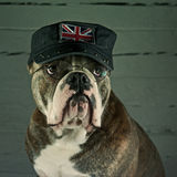 A support England dog Royalty Free Stock Images