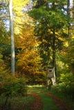 Support européen de chasse dans la forêt de hêtre Photographie stock