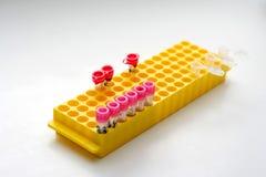 Support jaune des tubes à essai pour les liquides biologiques Photographie stock libre de droits