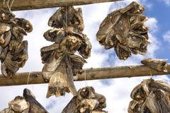 Support pour sécher le stockfisch chez Lofoten photo stock