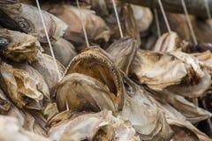 Support pour sécher le stockfisch chez Lofoten images libres de droits