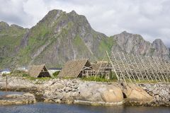 Support pour sécher le stockfisch chez Lofoten photos libres de droits