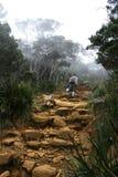 Support s'élevant Kinabalu, Bornéo, Malaisie Image libre de droits
