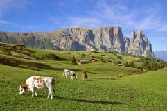 Support Sciliar, dolomites, Tyrol du sud image libre de droits