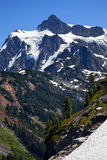 Support Shuksan Washington de plantes vertes de neige Photo stock