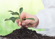 Support small plant Stock Photography