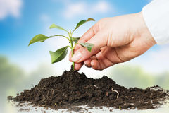 Support small plant Stock Photo