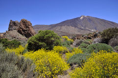 Support Teide aux îles Canaries Image libre de droits
