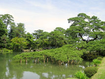 Supported tree branch in Kenrokuen Garden pond Royalty Free Stock Image