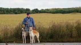 Supporti del cacciatore con i cani nell'agguato stock footage
