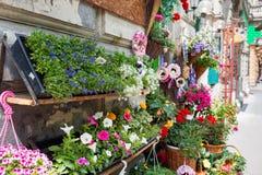 Supporto all'aperto del negozio di fiore con i vasi da fiori variopinti Immagine Stock