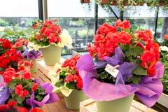 Supporto all'aperto del negozio di fiore con i vasi da fiori variopinti Fotografie Stock