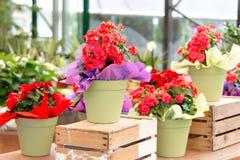 Supporto all'aperto del negozio di fiore con i vasi da fiori variopinti Fotografia Stock